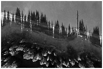 Aerial view of looking down Hyatt Lake shoreline with tree shadows. Cascade Siskiyou National Monument, Oregon, USA ( black and white)