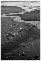 Stream on beach and seabirds, Pistol River State Park. Oregon, USA (black and white)