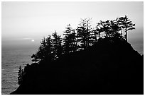 Trees on rock and ocean at sunset, Samuel Boardman State Park. Oregon, USA (black and white)