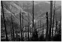 Tree squeletons and valley at the Edge. Mount St Helens National Volcanic Monument, Washington (black and white)