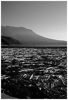 Layer of dead trees on Spirit Lake, and Mt St Helens. Mount St Helens National Volcanic Monument, Washington (black and white)