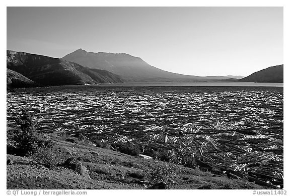 Spirit Lake clogged with dead trees. Mount St Helens National Volcanic Monument, Washington (black and white)