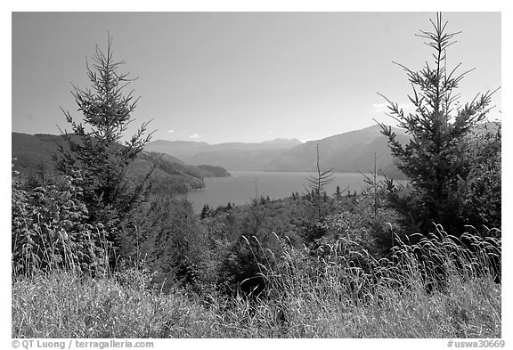 Grasses, trees, and Riffe Lake. Washington (black and white)