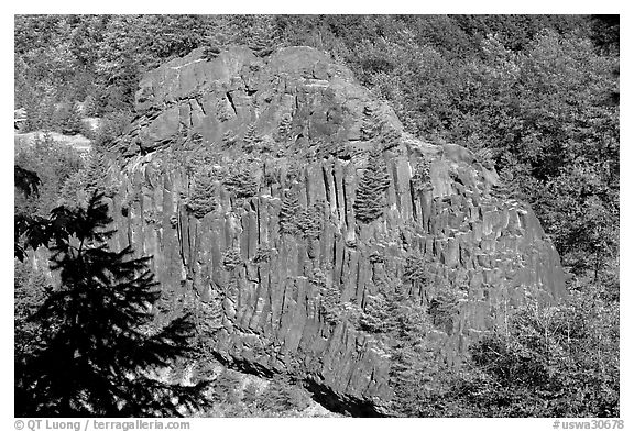 Bloc of columnar basalt, Lava Canyon. Mount St Helens National Volcanic Monument, Washington (black and white)