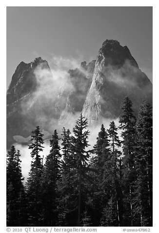 Spruce, fog, and Liberty Bell Mountain. Washington (black and white)