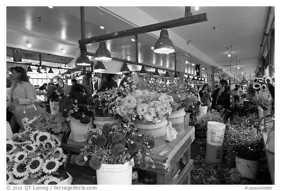 Flowers for sale in Main Arcade daystall,. Seattle, Washington (black and white)