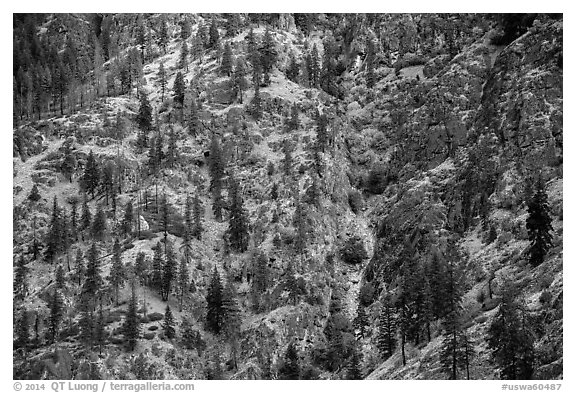 Mix of conifers and deciduous trees in autumn on rocky slopes, Lake Chelan. Washington (black and white)