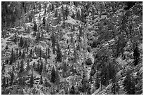 Mix of conifers and deciduous trees in autumn on rocky slopes, Lake Chelan. Washington ( black and white)