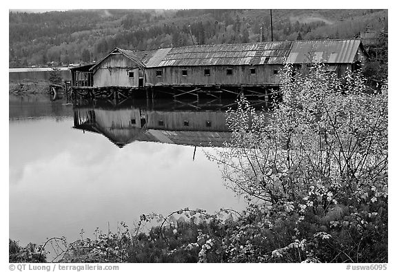 Wooden pier in autumn, Olympic Peninsula. Olympic Peninsula, Washington (black and white)