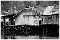 Old wooden pier, Olympic Peninsula. Olympic Peninsula, Washington ( black and white)