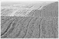 Undulating field with plowing patterns, The Palouse. Washington (black and white)