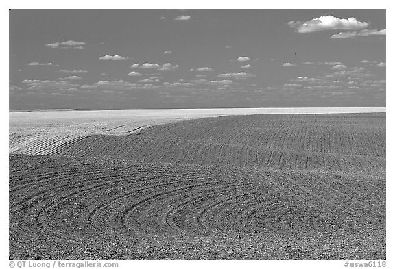 Field with curved plowing patterns, The Palouse. Washington (black and white)