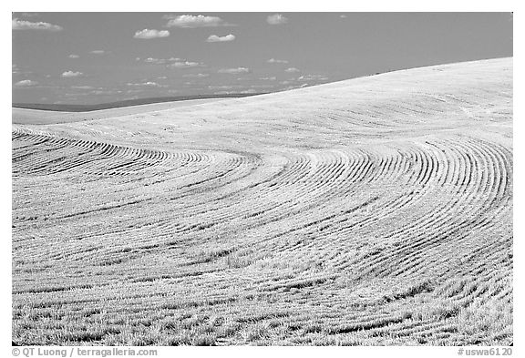 Yellow field with curved plowing patterns, The Palouse. Washington (black and white)