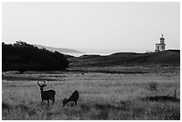 Deer, meadow and Cattle Point Lighthouse at sunrise, San Juan Island. Washington ( black and white)