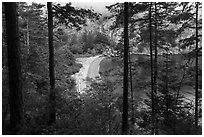 Beach through forest from above, Watmough Bay, Lopez Island. Washington ( black and white)