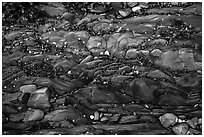 Close-up of pebbles and seaweed on rock slab, Watmough Bay, Lopez Island. Washington ( black and white)