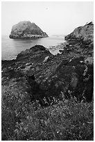 Point Colville, Lopez Island. Washington ( black and white)