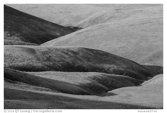 Grassy hills, Saddle Mountain Unit, Hanford Reach National Monument. Washington (black and white)