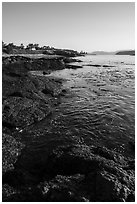Coastline, strait with kelp, Cattle Point NRCA, San Juan Islands National Monument. Washington ( black and white)