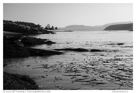 Strait with kelp, Cattle Point Natural Resources Conservation Area, San Juan Islands National Monument. Washington (black and white)
