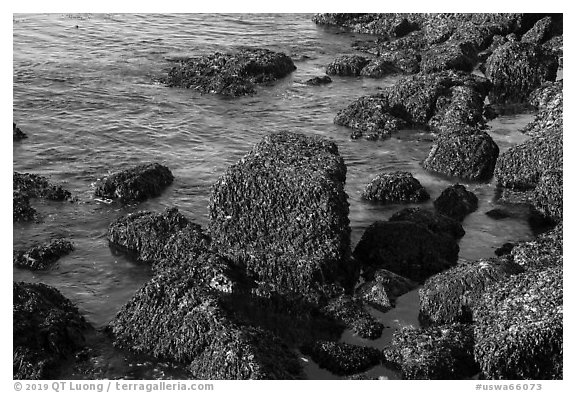 Rocks covered with seaweed, San Juan Islands National Monument, San Juan Island. Washington (black and white)