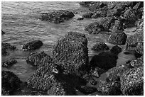 Rocks covered with seaweed, San Juan Islands National Monument, San Juan Island. Washington ( black and white)
