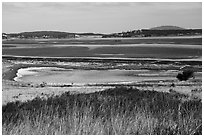 Jackles Lagoon, San Juan Island. Washington ( black and white)
