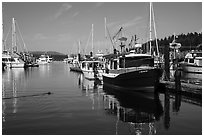 Friday Harbor marina with harbor seal, San Juan Island. Washington ( black and white)