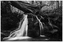 Rustic Falls, Cascade Creek, Moran State Park. Washington ( black and white)