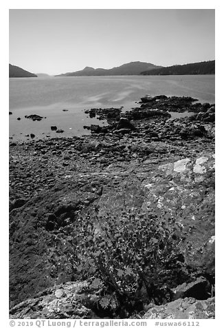 Wildflowers and lichen-covered rocks on Indian Island, San Juan Islands National Monument, Orcas Island. Washington (black and white)