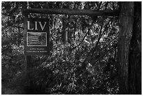 Lopez Island Vineyard and Winery sign, Lopez Island. Washington ( black and white)