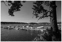 Pier, Fisherman Bay, Lopez Island. Washington ( black and white)