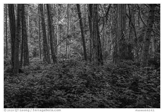 Forest near Point Coville, San Juan Islands National Monument, Lopez Island. Washington (black and white)