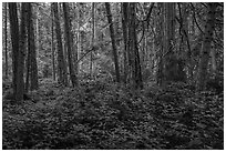 Forest near Point Coville, San Juan Islands National Monument, Lopez Island. Washington ( black and white)