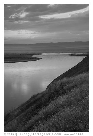 Grasses and Columbia River at sunset, Hanford Reach National Monument. Washington (black and white)