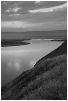 Grasses and Columbia River at sunset, Hanford Reach National Monument. Washington ( black and white)