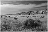 Grasses and cliffs in summer, Ringold Unit, Hanford Reach National Monument. Washington ( black and white)