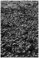 Grasses and volcanic rocks, Hanford Reach National Monument. Washington ( black and white)