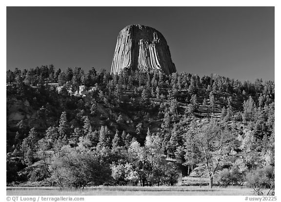 Devil's Tower rising above forested slope. Wyoming, USA (black and white)