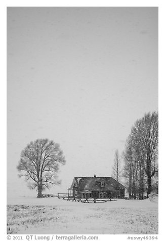 Historic house and bare trees in snow blizzard. Jackson, Wyoming, USA (black and white)