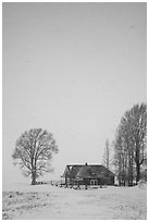 Historic house and bare trees in snow blizzard. Jackson, Wyoming, USA ( black and white)