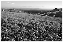 Carpet of alpine flowers, Beartooth Mountains, Shoshone National Forest. Wyoming, USA ( black and white)