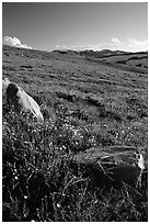 Summer alpine meadow and rocks, late afternoon, Beartooth Range, Shoshone National Forest. Wyoming, USA (black and white)