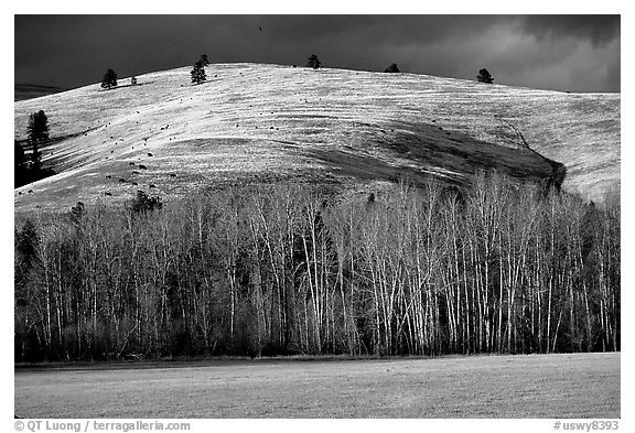 Trees and hills in late fall. Wyoming, USA (black and white)