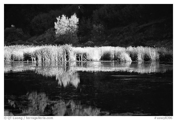Grasses along the Snake River in late afternoon light. Wyoming, USA (black and white)