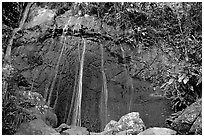 La Coca Falls, El Yunque, Carribean National Forest. Puerto Rico ( black and white)