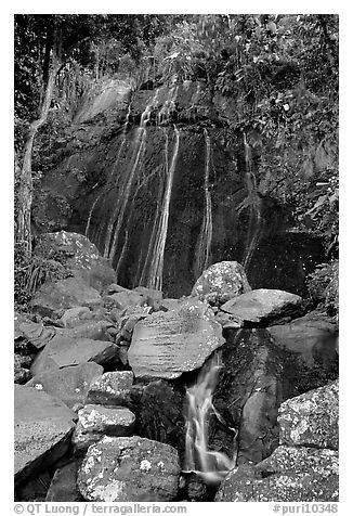 La Coca Falls, El Yunque, Carribean National Forest. Puerto Rico (black and white)