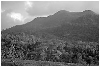 Forest-covered hill. Puerto Rico ( black and white)