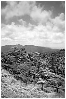Hills covered with tropical forest. Puerto Rico ( black and white)