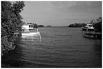 Bay with mangroves, La Parguera. Puerto Rico (black and white)